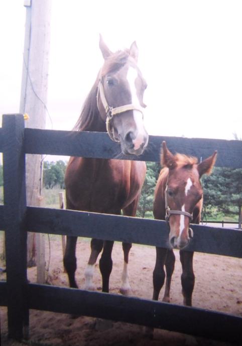 New Foal and Mare Fenton, Michigan