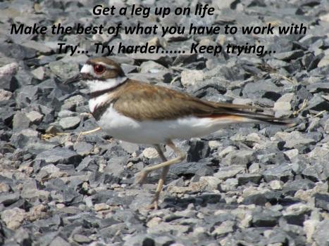 A Leg Up On Life